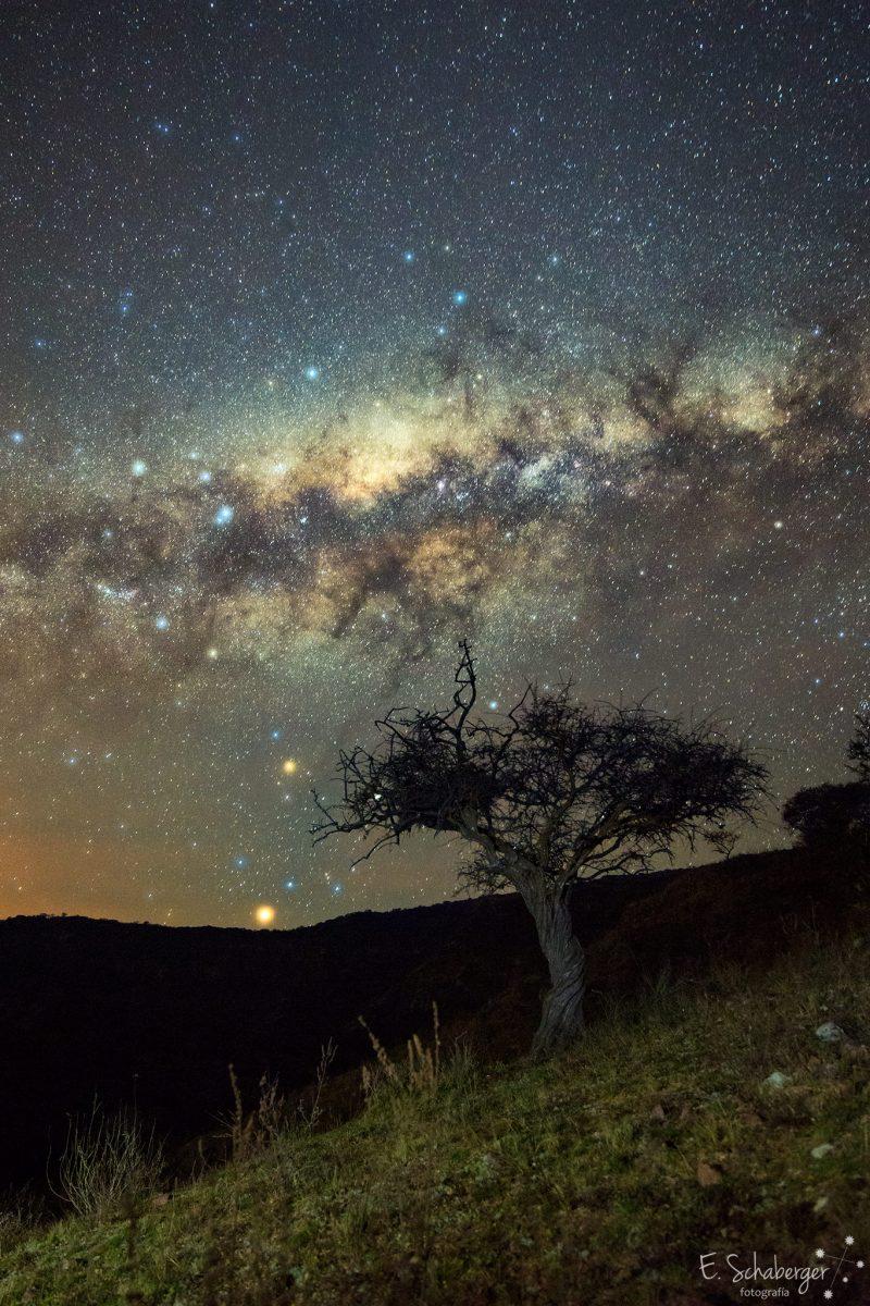 Lonely-Tree-Milky-Way